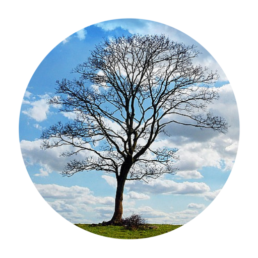 A tree against a beautiful blue sky. The Peaceful Professor works to incorporate mindfulness and meditation practices into higher education to help improve the wellbeing of professors and students.